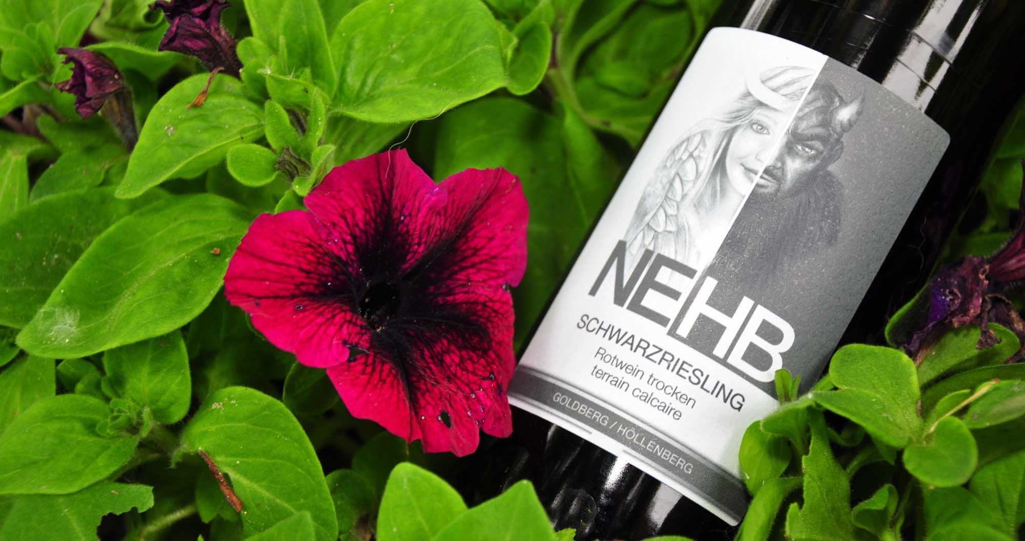 Schwarzriesling Rotwein Weingut Nehb