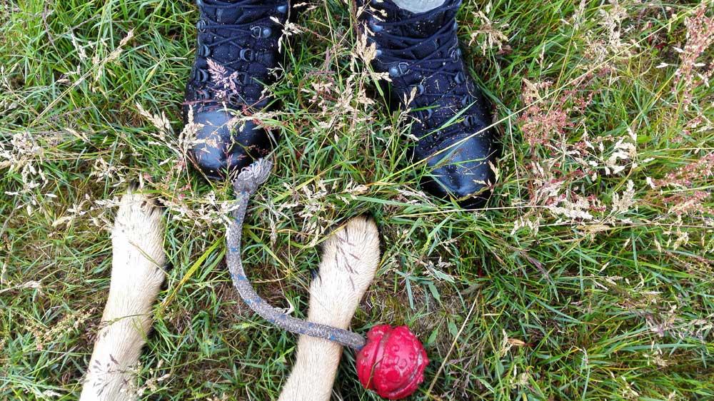 Für den Fuß – HAIX Scout Black – Allround Stiefel